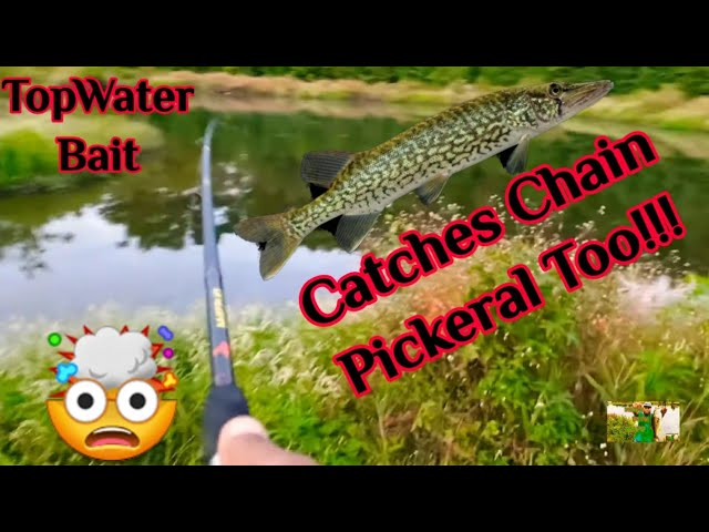 I Wasn't Expecting To Catch This Fish‼️ (Invasive Species) #Youtube #FishNWithMaYo #InvasiveSpecies