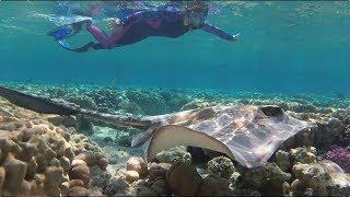 Египет октябрь 2019 Подводный мир отеля Faraana Reef Resort