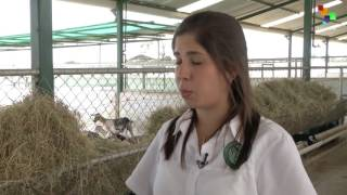 Venezuela: Biggest Goat Farm Seeks to Reach Further