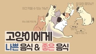 고양이에게 나쁜 음식&좋은 음식|쉐어하우스