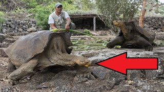 Epic Wildlife Comebacks!