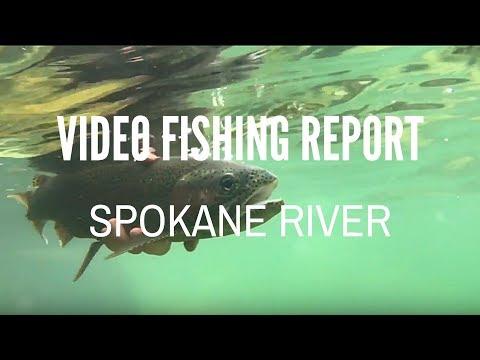 Spokane River - Fall Video Fly Fishing Report