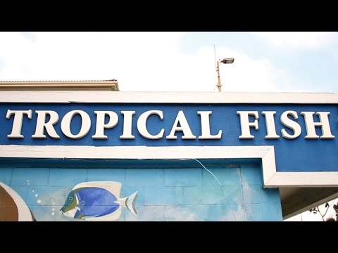 Tropical Fish Store Tours: Tropical Imports