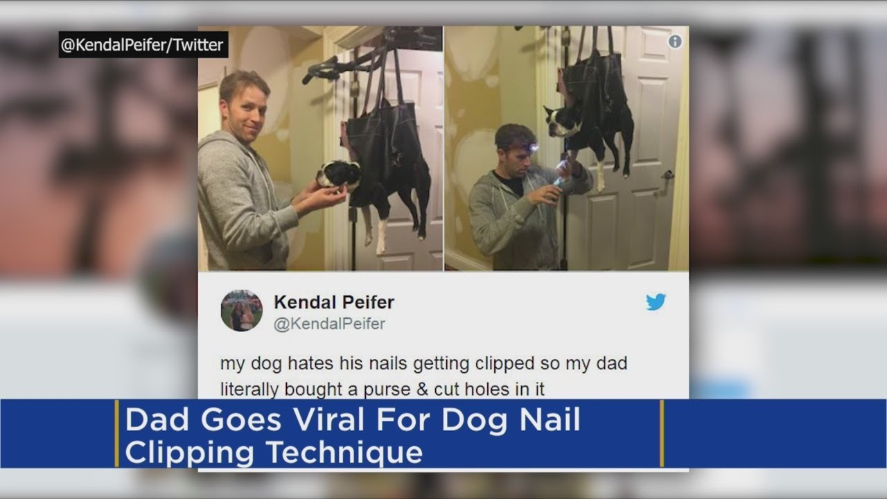 Father's Creative Way Of Cutting Dog's Nails Goes Viral