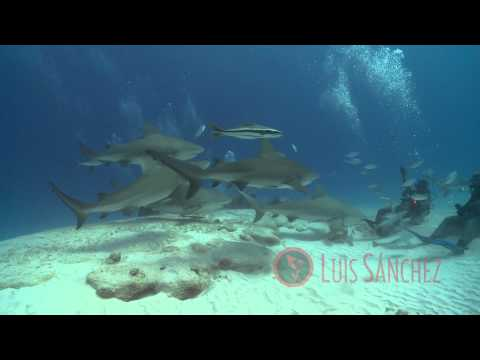 Mexican Caribbean ( sea ) Underwater planet series HD