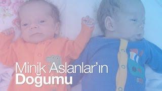 Minik Aslanların Doğumu | Prematüre Doğan İkiz Bebekler