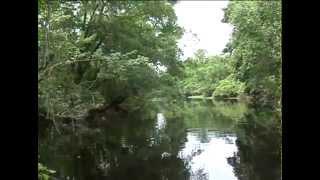 Bayou Teche National Wildlife Refuge Boat Tour