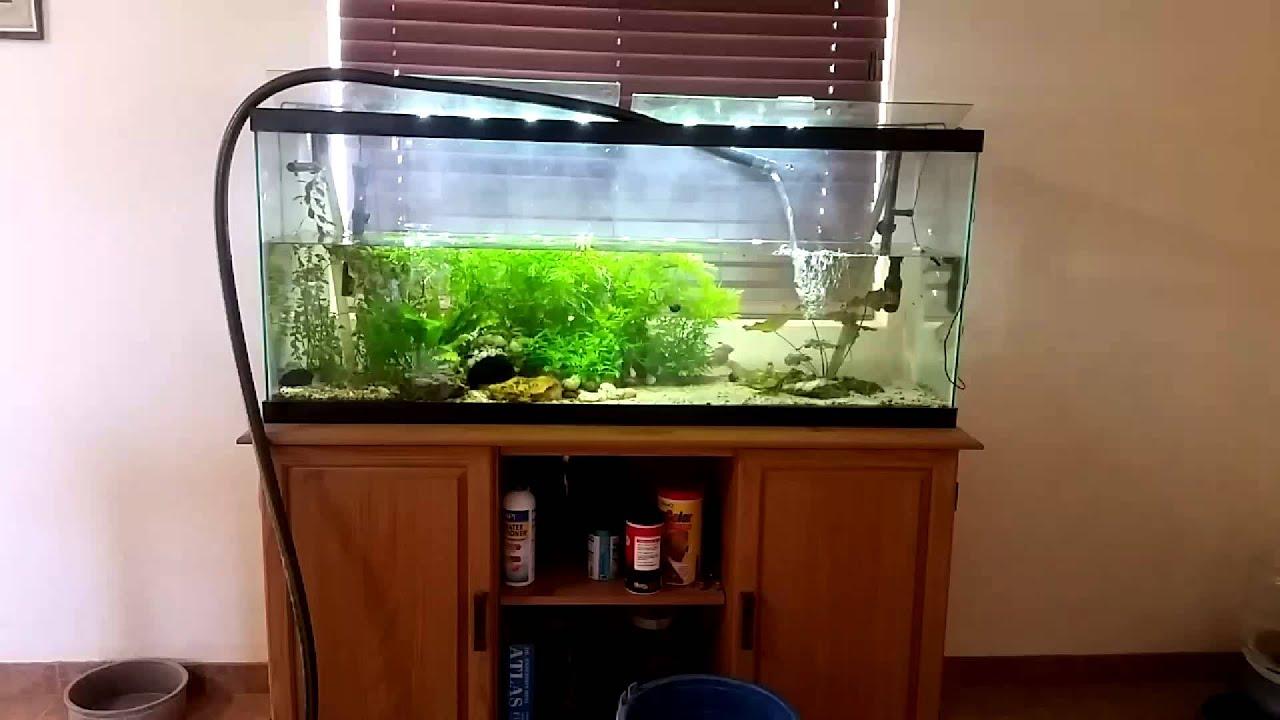 Filling up fish tank