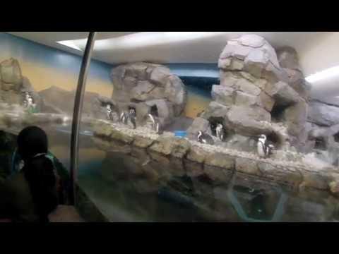 Georgia Aquarium Tour in Atlanta, Georgia