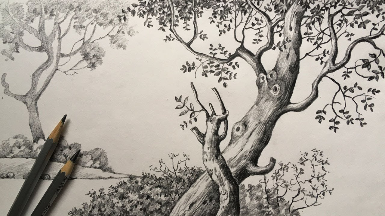 Tree Drawing In Pencil Pencil Sketch For Beginners Scenery Drawing Paintingtube