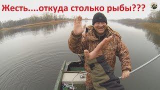 Жесть....откуда столько рыбы???...bogomaz05