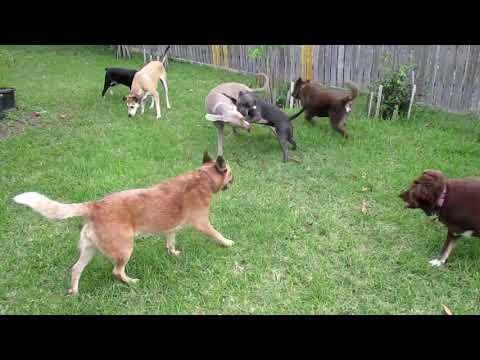 Friday Dog Crew