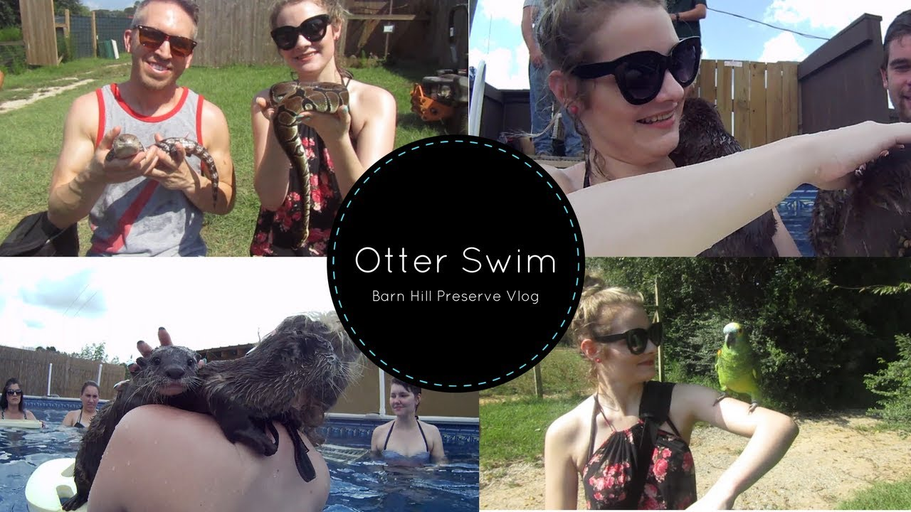 I SWAM WITH OTTERS!   Barn Hill Preserve Vlog - YouTube