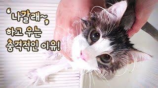 고양이가 '나갈래' 하고 한국말 터지는 충격적인 이유!