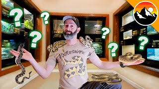 SNAKE CHALLENGE - Which one is Deadliest?!