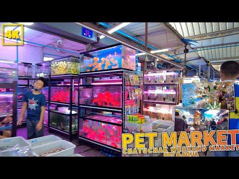 BANGKOK PET MARKET / Chatuhcak weekend market
