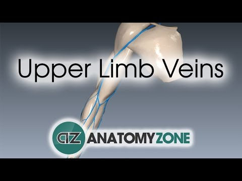 Upper Limb Veins - 3D Anatomy Tutorial