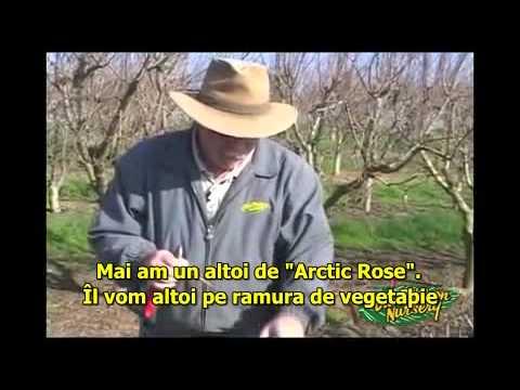 Altoirea Pomilor[sub]1.avi