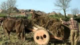 Luis Portugal - Tras os Montes