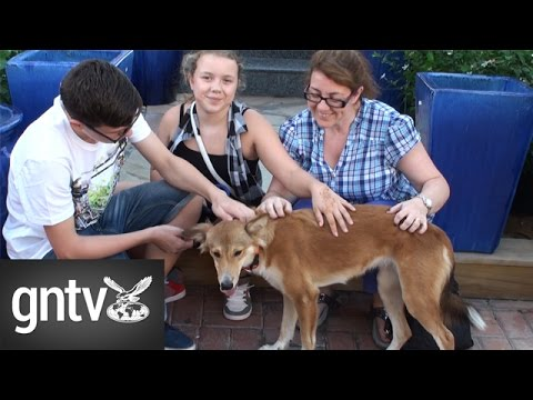 Adopting a dog in Dubai - Part 2