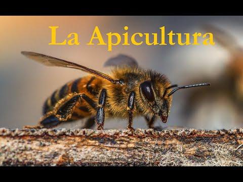 la-apicultura