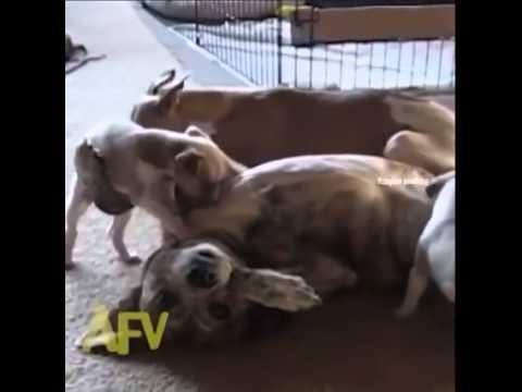 Dog Throw Aka Yeet Yeet Yeeeeeeet Youtube
