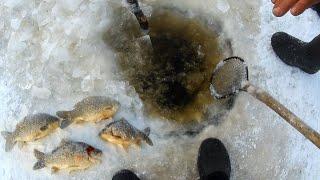 ЗИМНИЕ РЫБАЦКИЕ БУДНИ Подледный лов КАРАСЯ на СЕТИ Зимняя рыбалка