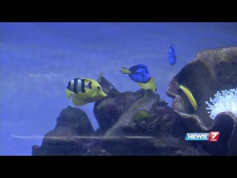 Colour fish farming and business developments in TN  | News7 Tamil