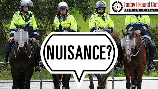 Do Mounted Police Officers Have to Clean Up Their Horse