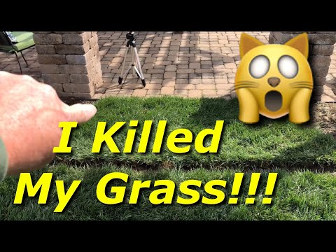 I Killed My Grass! - How To Edge Around Trees