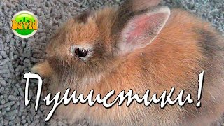 Funny Animals Пушистые кролики Рыбки Попугайчики Пушистики Видео для детей  Splendidi animali(Сегодня мы побывали в зоомагазине. Встретили там пушстых кроликов,рыбок,попугайчиков. Видео для детей...., 2016-03-29T22:58:35.000Z)