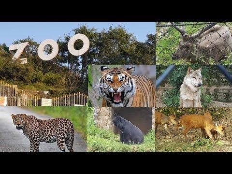 नैनीताल ज़ू / Nainital Zoo - All Animals [HD] - Complete Tour