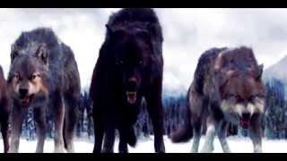 Gambar cover Wolfteam - GölgeHaramileri - Kral Biziz ( KLan Şarkısı )