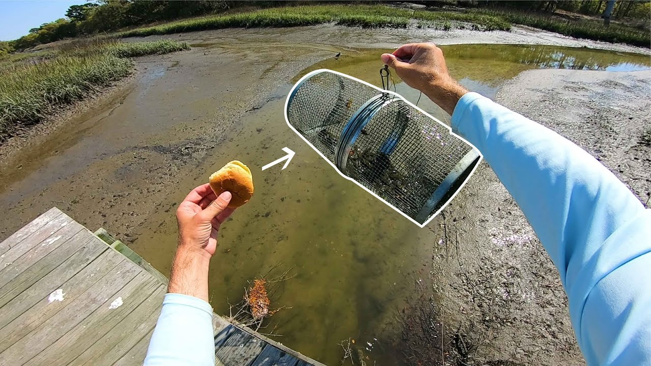 Minnow Trap Fishing to Catch Dinner - Easiest Way to Catch Fresh Bait!!