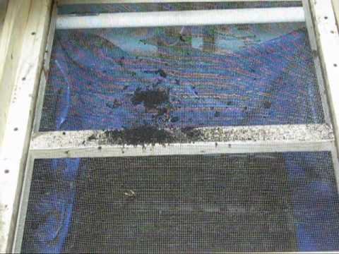 Worm Castings - Black Gold - Organic Fertilizer