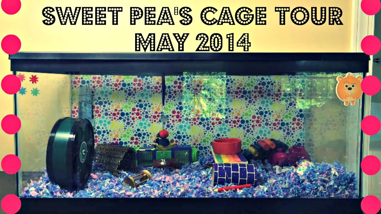 Sweet pea 39 s hamster cage tour may 2014 youtube for Fish tank for hamster