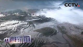 [中国新闻] 重庆酉阳:雨后梯田云雾缭绕美景如画 | CCTV中文国际