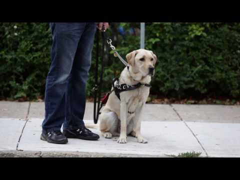 Lions Foundation Of Canada Dog Guides - Video