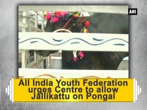 All India Youth Federation urges Centre to allow Jallikattu on Pongal - ANI News