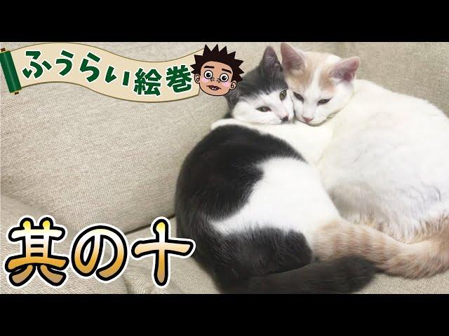 【池崎家の猫】ふうらいウォッチング!ふうらい絵巻~其の十~