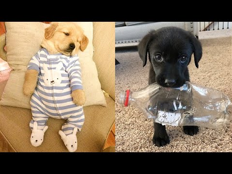 Baby Dogs - Cute and Funny Dog Videos Compilation #8 | Aww Animals