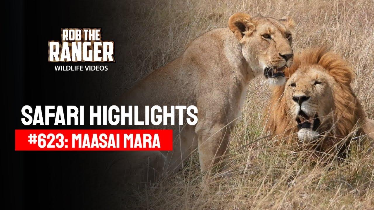 Safari Highlights #623: 30th August 2021   Maasai Mara/Zebra Plains   Latest Wildlife Sightings