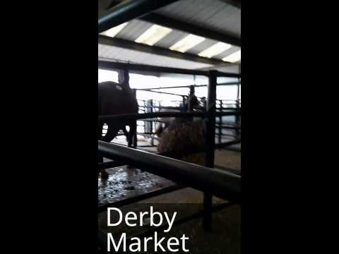 Derby Horse Sale 26th April 2014