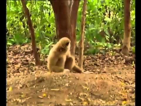 R.R...Monkey Slap Tiger...[0[...(*_*} thumbnail