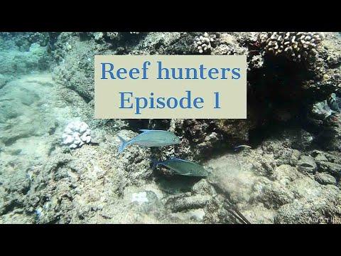Spearfishing Oahu  (Reef Hunters Episode 1)