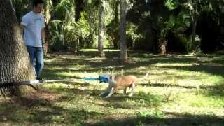 How to Use the Super Tug Dog Toy Thumbnail