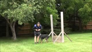Sofie (doberman Pinscher) Boot Camp Dog Training