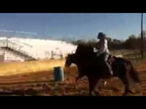 Sorrel Quarter Horse Mare for Sale