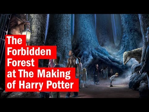 A look inside The Forbidden Forest at The Making of Harry Potter | First Look | Time Out London
