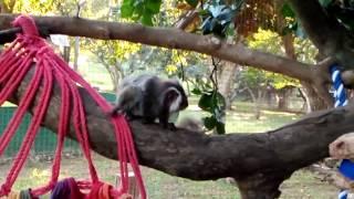 New Marmoset Monkey Enclosure!!